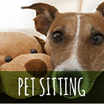 How to Start a Pet Sitting Business with Successful Plan
