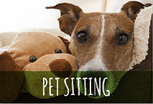 pet sitting business plan